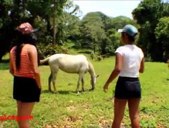 سكس حصان مع سمين